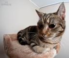 Katze mit Fisheye fotografiert