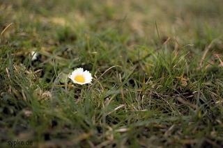 Nikon 35mm f1.8 Beispielbild - Sample